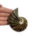 ammonite fossil 11