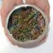 Bismuth cluster