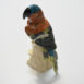 Serpentine Parrot