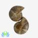 Ammonite Split Pair