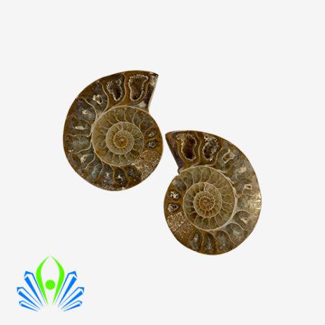 Ammonite light 2